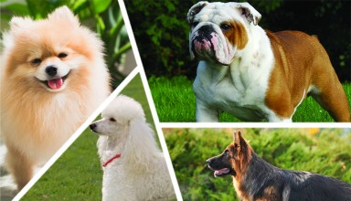 Dog breeds quiz